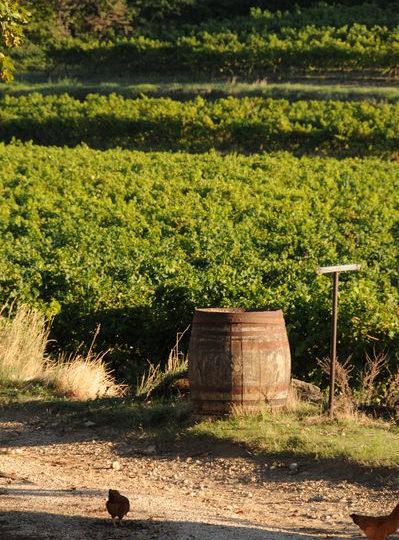 Domaine des Rosier à Chantemerle-lès-Grignan - 4