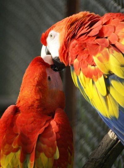 Le Jardin aux oiseaux à Upie - 1