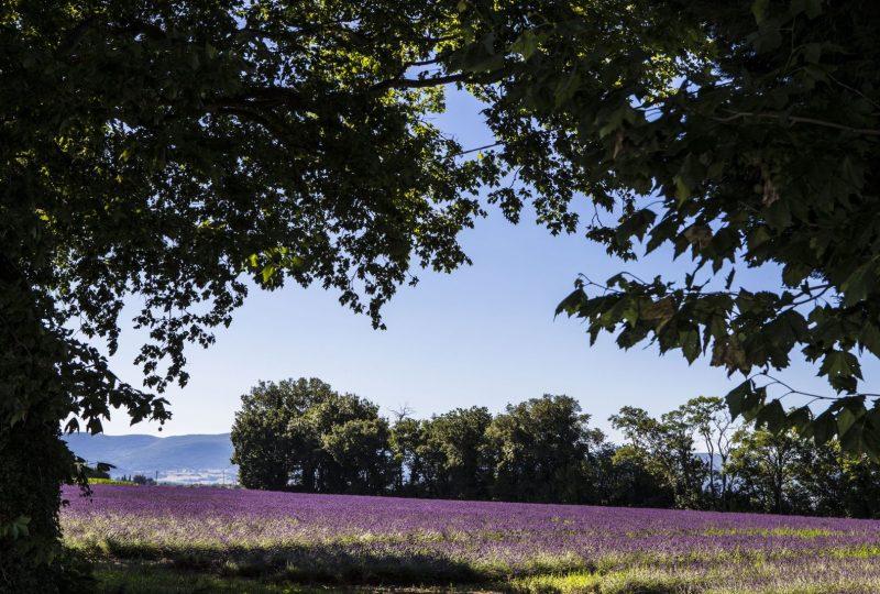 «Journée Émotions» : Découvrez l'essentiel de la Drôme Provençale à Pierrelatte - 0
