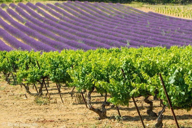 Séjour Aux Portes de Provence (3 jours / 2 nuits) à Montélimar - 0