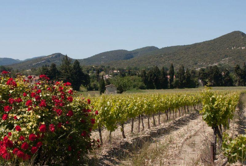 Les Vignerons de Valléon – Caveau de St Gervais sur Roubion à Saint-Gervais-sur-Roubion - 3