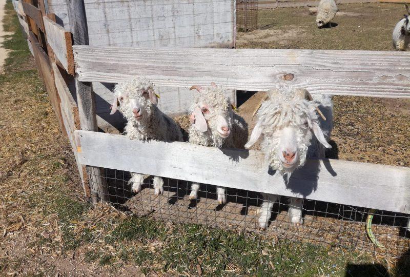 Ferme : Au bonheur des animaux à La Garde-Adhémar - 6