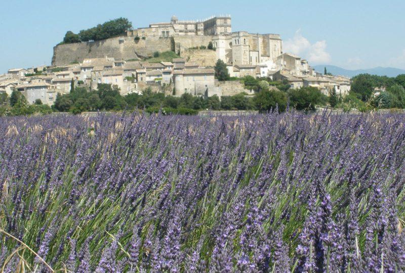 Porte de Provence à Châteauneuf-du-Rhône - 7