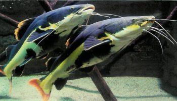 Aquarium Allex 2009