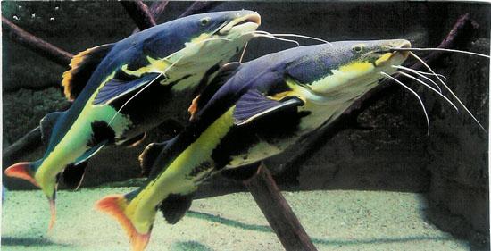 Aquarium des Tropiques à Allex - 0