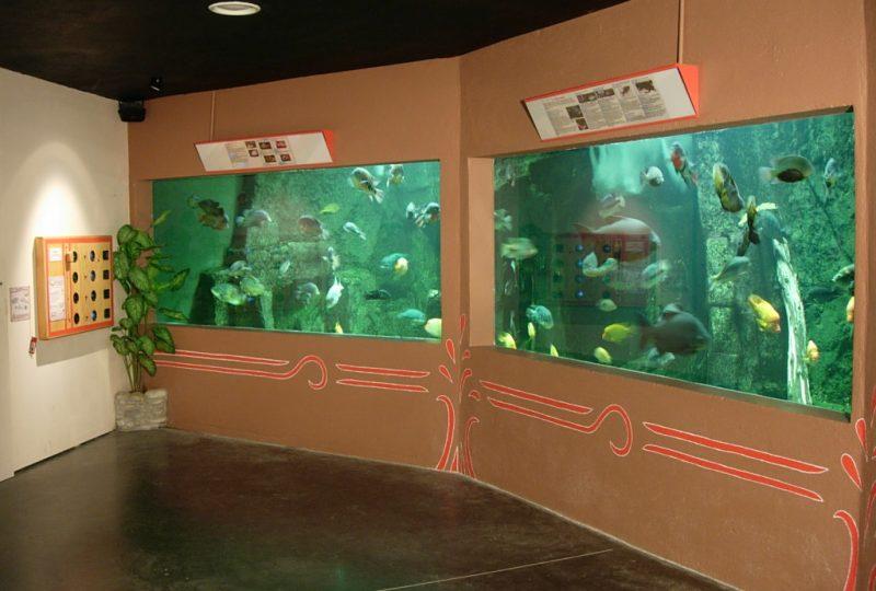 Aquarium des Tropiques à Allex - 3