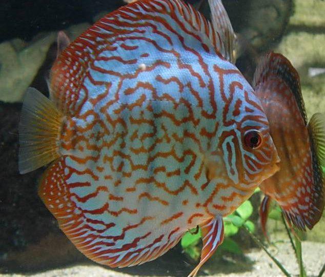 Aquarium des Tropiques à Allex - 8
