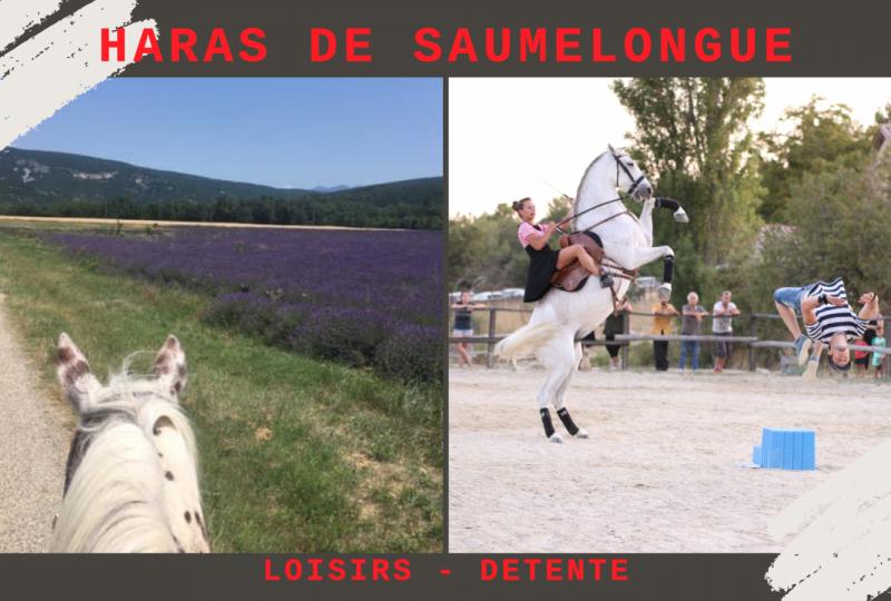 Haras de Saumelongue à Puy-Saint-Martin - 0